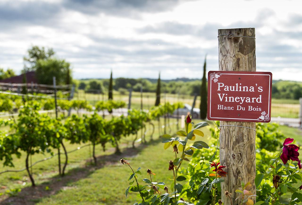 Paulina's Vineyard - Pic courtesy of Lash Photography